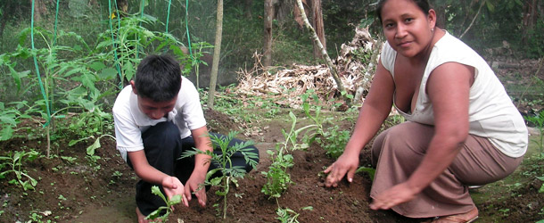 sustainable development - vegetable garden in Ecuador