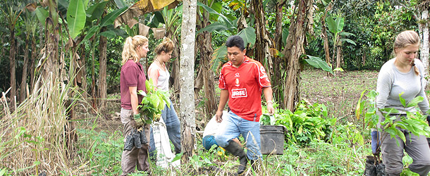 international volunteers on a gap year program plant cacao trees in Santo Domingo
