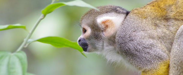 Animal rescue center for monkeys and other rainforest animals in Ecuador