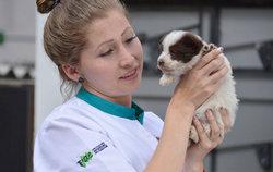Yanapuma volunteers help in animal and pet rescue center in Quito